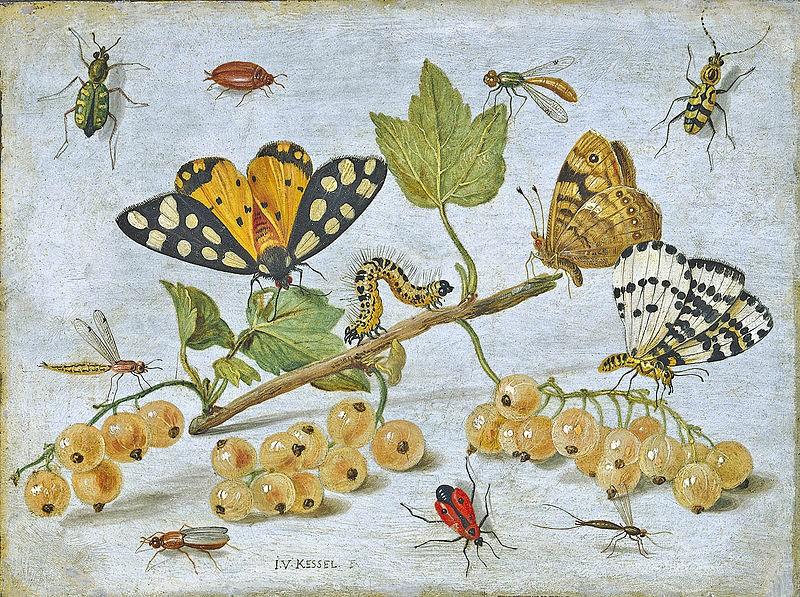 Jan van Kessel the Elder, Insects and Fruit, c. 1660-65, oil on copper